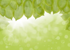 Background of green leaves, summer or spring Royalty Free Stock Image