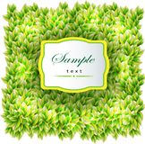 Background on green leaves texture Royalty Free Stock Photography