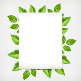 Background with green leaves. Vector eps-10. Stock Photography