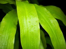 Background Of Green Leaves With Water Droplets Stock Photos