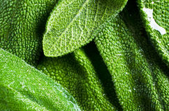 Background of green leaves Stock Image