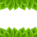 Background with green leaves Stock Images