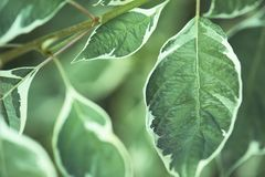Background of green leaves with a white border Stock Image