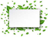 Background with green leaves. White background with fresh green leaves. Vector paper illustration Stock Photography