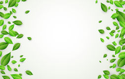 Background with green leaves. White background with fresh green leaves. Vector paper illustration Stock Photos
