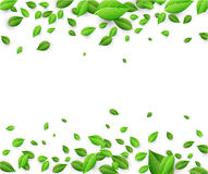 Background with green leaves. White background with fresh green leaves. Vector paper illustration Royalty Free Stock Images