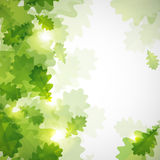 Background with green oak leaves. Abstract shiny background with green oak leaves royalty free illustration