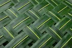 Background. Green palm leaves Royalty Free Stock Photos