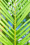 Background of green palm tree leaves Stock Image