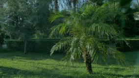 Background with green palm trees.  stock footage