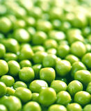 Background of green peas. Background of wet green peas Stock Image