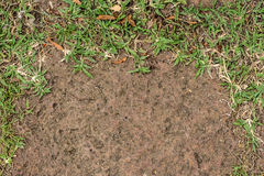 Background of green plants and floor sand Royalty Free Stock Photography