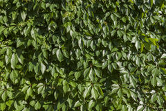 Background of green plants Stock Photo