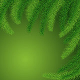 Background of green prickly branches of a Christmas tree Royalty Free Stock Photography