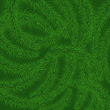 Background of green prickly branches of a Christmas tree Stock Photo