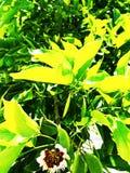 background green shamrock nature background, fresh green juicy color, shamrock plant - ImagefromIndia royalty free stock photography