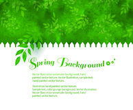 Background with green shrubs Stock Photo