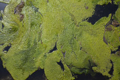 Background green slime Royalty Free Stock Photo