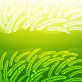 Background with green spikelets Stock Images