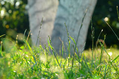 Background with Green Summer Landscape. Green grass and tree closeup with flowers royalty free stock photo