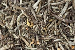 Background green tea Stock Photography