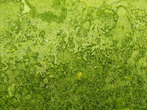 Background green texture rough grass Royalty Free Stock Image