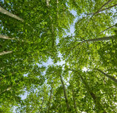 Background of green trees Stock Photography