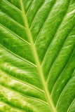 Background of green tropical leaf Stock Photos