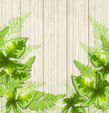 Background with green tropical leaves Royalty Free Stock Photography