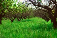 Background green wallpaper grass garden Royalty Free Stock Images