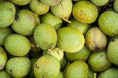 Background the green walnuts Stock Images