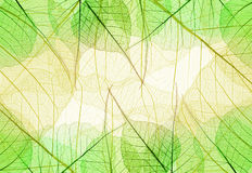Background of Greenand Yellow Leaves Royalty Free Stock Image