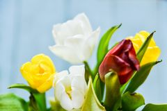 Background, greeting card: bouquet of multicolored tulips on a light background. Layout, mocap, for your text mother\'s day, copys. Floral, spring Background Royalty Free Stock Photo