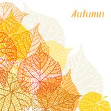 Background, greeting card with stylized autumn Royalty Free Stock Image