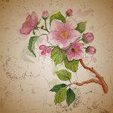 Background for greeting card  with watercolor cherry blossoms Stock Photos