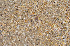 Background of ground sea shells and sand. the concept of recreation on the coast, tourism, travel