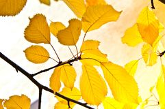 Background group of autumn leaves Royalty Free Stock Photography