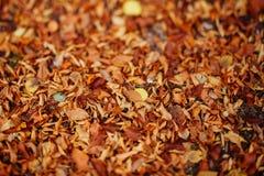 Background group autumn orange leaves. Background group autumn orange colorful leaves. Outdoor royalty free stock image