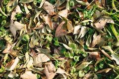 Background group autumn orange leaves. Outdoor. Royalty Free Stock Photos