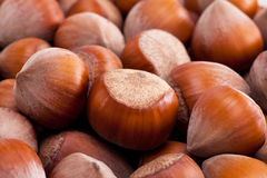 Background of group of hazelnuts in husks close up Stock Photos