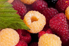 Background of group of red and white raspberries macro Stock Photo