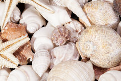 Background of group of various seashells Royalty Free Stock Photo
