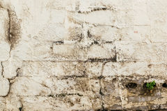 Background. Grunge concrete wall and grass background Royalty Free Stock Images