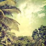 Background-58. Grunge palm background in summer style Stock Photos