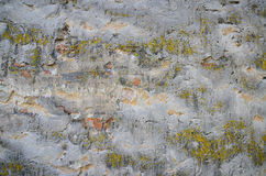 Background of a grungy gray cement wall with moss Stock Photos