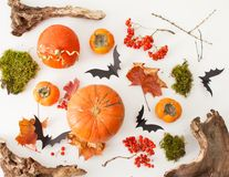 Background for halloin of bats, pumpkins and driftwood Royalty Free Stock Photography