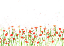 Background with hand drawing watercolor red poppies on white. royalty free illustration