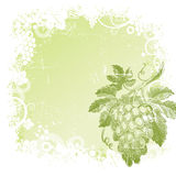 Background with hand drawn bunch of grapes stock illustration