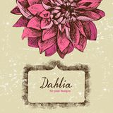 Background with hand drawn dahlia Stock Image
