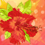 Background with hand drawn flowers Royalty Free Stock Images